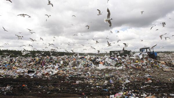 Полигон твердых бытовых отходов - Sputnik Латвия