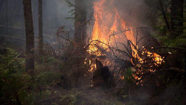 Лесные пожары - Sputnik Латвия