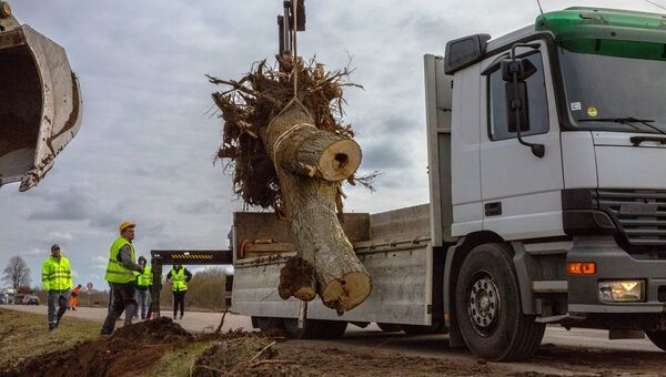 Муравейник с деревом переезжает на новое место - Sputnik Латвия