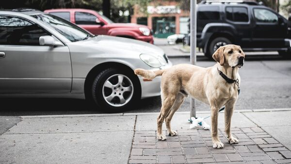 Собака на улице - Sputnik Латвия