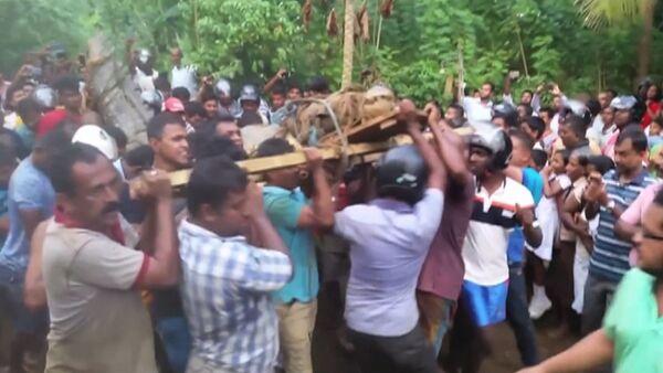 Жители деревни в Шри-Ланке поймали и связали пятиметрового крокодила - Sputnik Latvija
