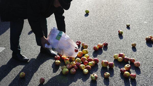 Яблоки - Sputnik Латвия