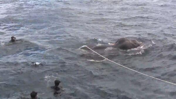 ВМС Шри-Ланки спасли унесенного в море слона - Sputnik Латвия