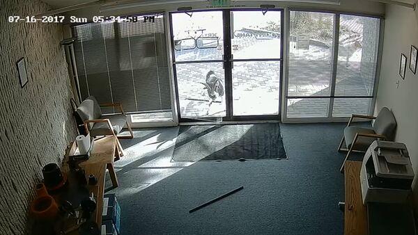 Ietiepīgs āzis ielauzās amerikāņu kompānijas ofisā - Sputnik Latvija
