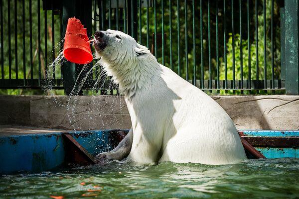 Baltā lācene Nika Maskavas zoodārzā - Sputnik Latvija