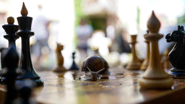 Улитка играет в шахматы - Sputnik Латвия