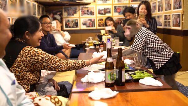 Обезьянки-официанты в японском кафе - Sputnik Латвия
