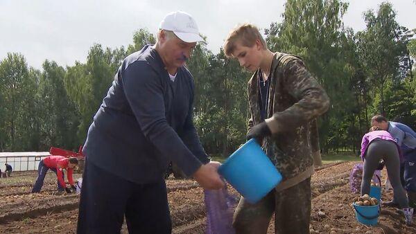 Лукашенко помогает заниматься сбором картофеля в Белоруссии - Sputnik Латвия