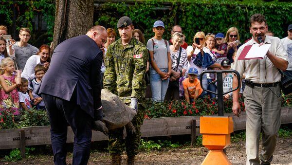 Раймонд Бергманис и Уэйд Ратленд несут черепаху на весы - Sputnik Латвия