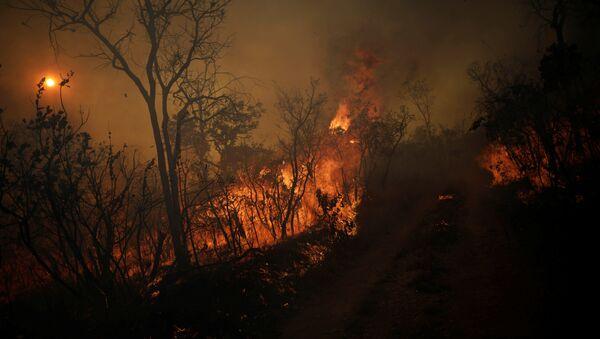 Лесной пожар - Sputnik Latvija