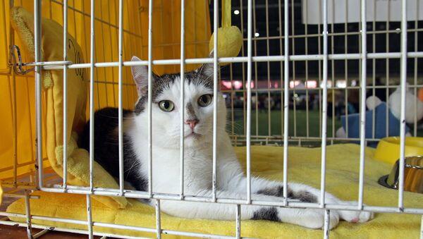 Коты из приюта для животных Улубеле ищут хозяев - Sputnik Latvija