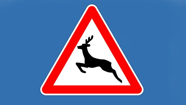 Знак Осторожно - дикие животные - Sputnik Латвия