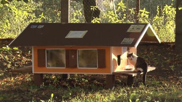 Рижанин построил 80 домиков для бездомных кошек - Sputnik Latvija