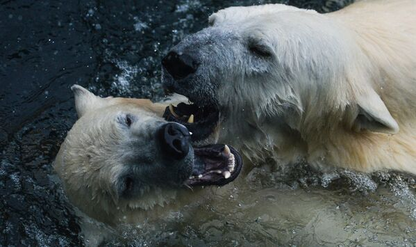 Baltie lāči - Sputnik Latvija