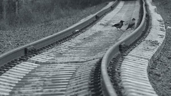 Птицы на рельсах - Sputnik Латвия