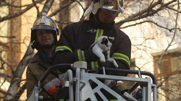 Сотрудники пожарной охраны спасают кошку - Sputnik Latvija