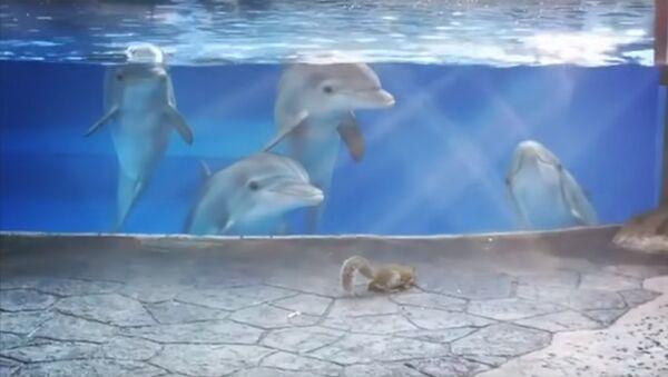 Дельфины наблюдают за белкой - Sputnik Латвия
