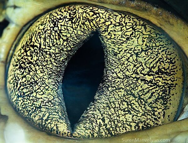 Глаз каймана - Sputnik Латвия