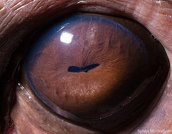 Глаз бегемота - Sputnik Латвия