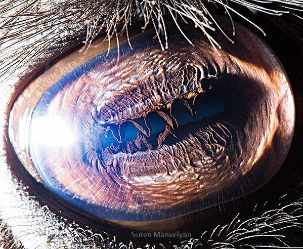 Глаз верблюда - Sputnik Латвия