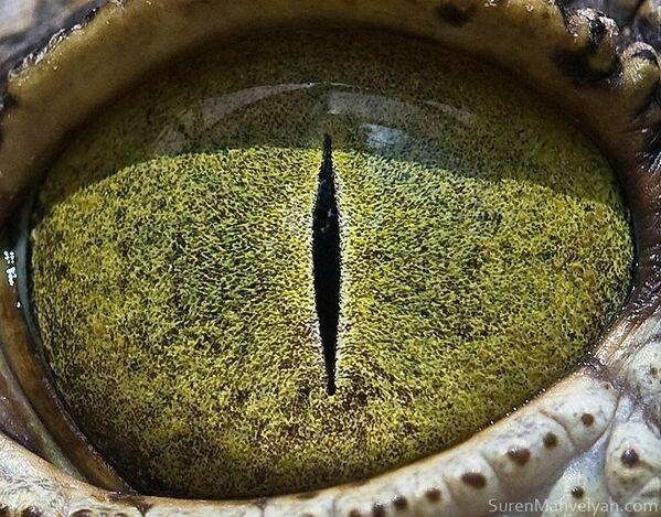 Глаз крокодила - Sputnik Латвия
