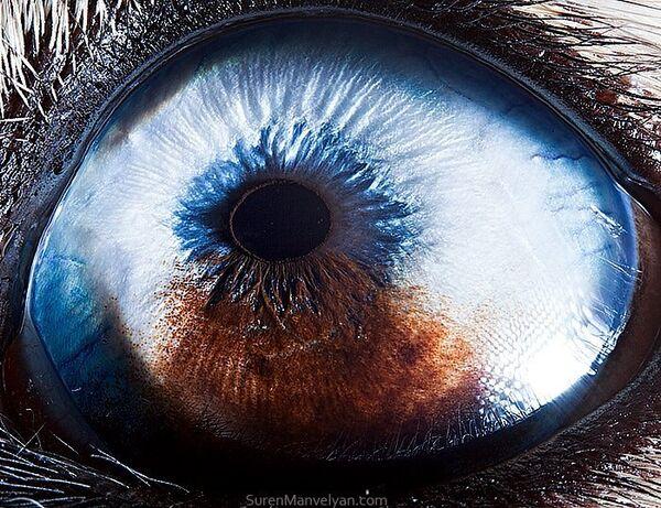 Глаз собаки хаски - Sputnik Латвия
