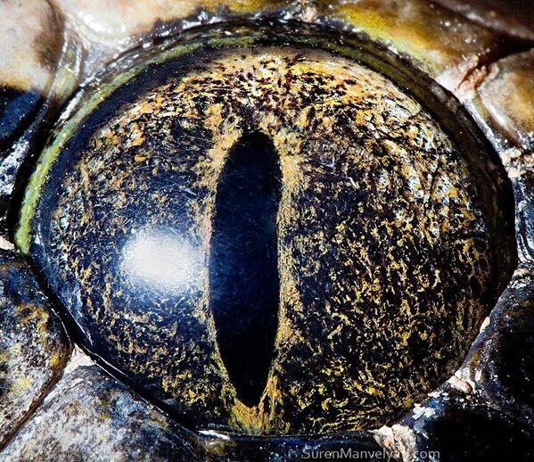 Глаз тигрового питона - Sputnik Латвия
