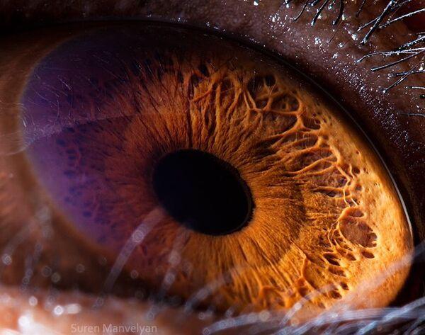 Глаз шимпанзе - Sputnik Латвия