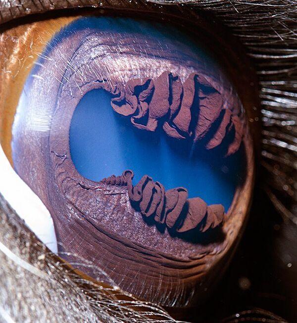 Глаз ламы - Sputnik Латвия