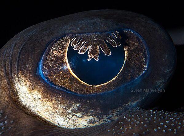 Глаз морской лисицы - Sputnik Латвия