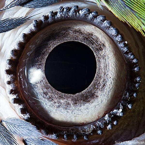 Глаз сине-желтого попугая - Sputnik Латвия