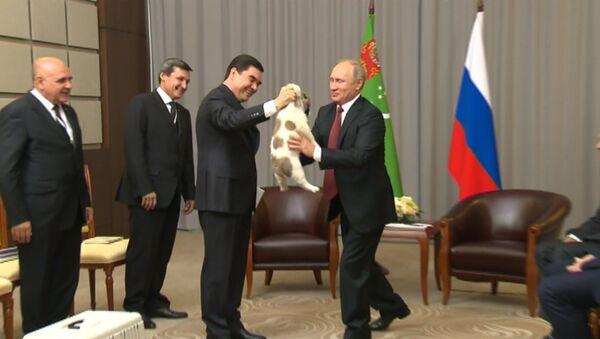 Гурбангулы Бердымухамедов подарил Путину щенка алабая - Sputnik Латвия