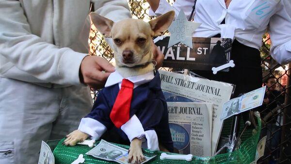 Ņujorkā nosvinēja suņu Helovīnu - Sputnik Latvija