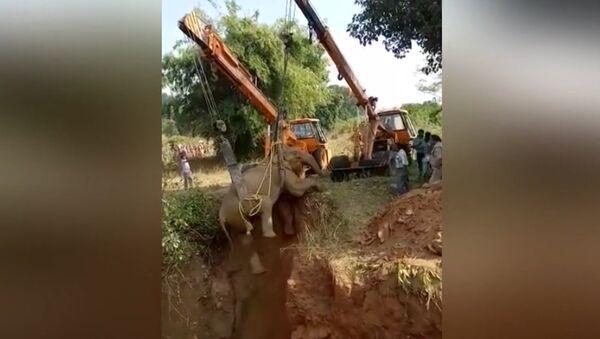 В Индии спасли упавшую в пустой колодец слониху - Sputnik Латвия