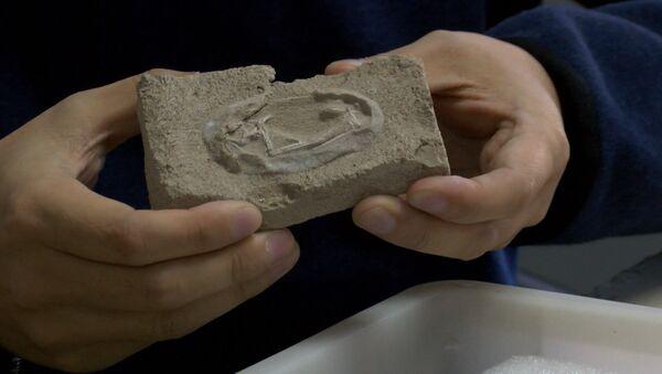 В Китае нашли кладку яиц птерозавра возрастом около 120 миллионов лет - Sputnik Latvija