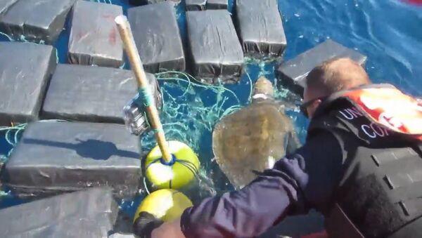 Спасение черепахи, застрявшей среди тюков с кокаином - Sputnik Latvija