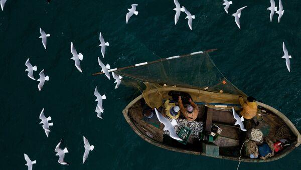 Zvejnieki Melnās jūras zivju piekrastes zvejā Sevastopolē - Sputnik Latvija