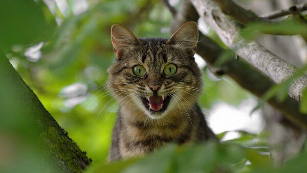 Кошка на дереве - Sputnik Latvija