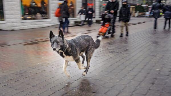 Собака на улице Юрмалы - Sputnik Латвия