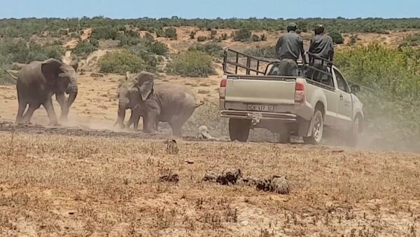 Слоненка в Африке спасли из ямы с грязью - Sputnik Латвия