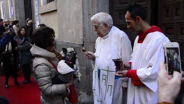 Священники благословили тысячи домашних животных в Мадриде - Sputnik Латвия