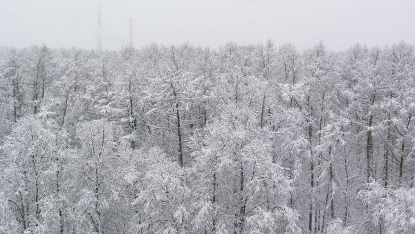 Деревья в парке, занесенные снегом - Sputnik Латвия