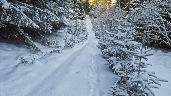 Sniegs. Foto no arhīva - Sputnik Latvija