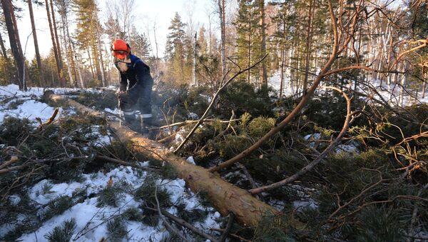 Заготовка древесины в Челябинской области - Sputnik Латвия