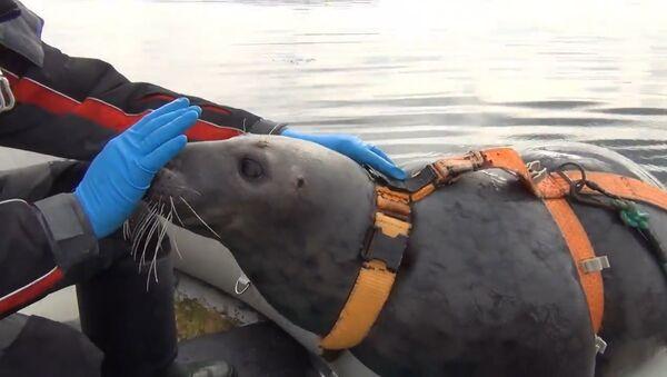 Murmanskā roņus gatavo kaujas uzdevumu izpildei - Sputnik Latvija