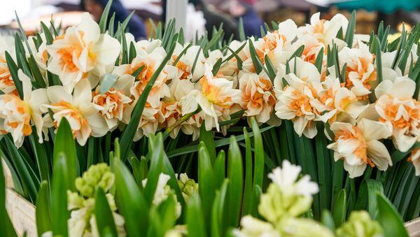 8 марта на Центральном рынке в Риге - Sputnik Latvija