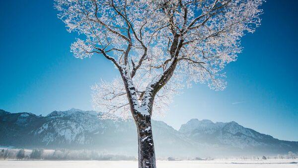 Снимок замерзшего дерева в Германии фотографов из проекта How Far From Home - Sputnik Латвия