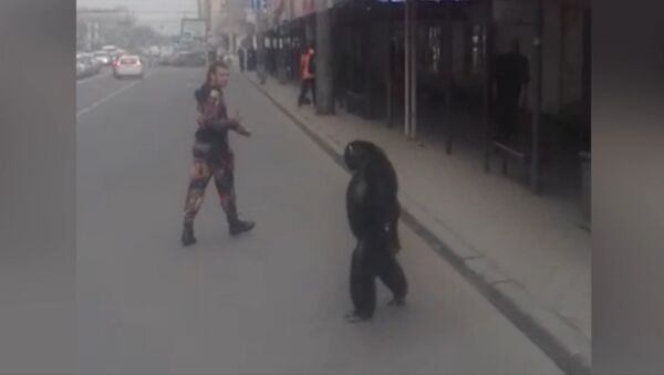 Шимпанзе сбежал из гастролирующего цирка в Краснодаре - Sputnik Latvija