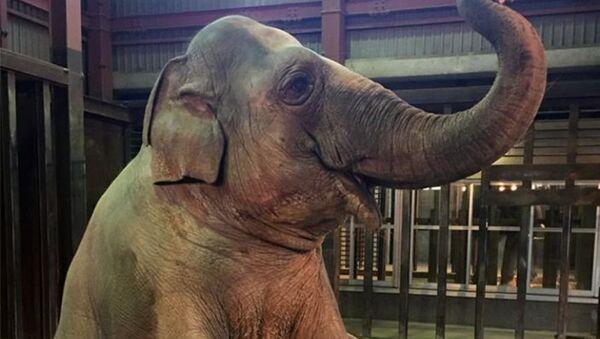 Слониха Зузе в японском зоопарке - Sputnik Латвия