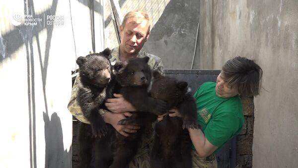 В Крыму публике показали трех медвежат, родившихся в сафари парке Тайган - Sputnik Латвия